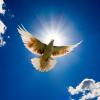 O Significado ritual do dom da paz na missa